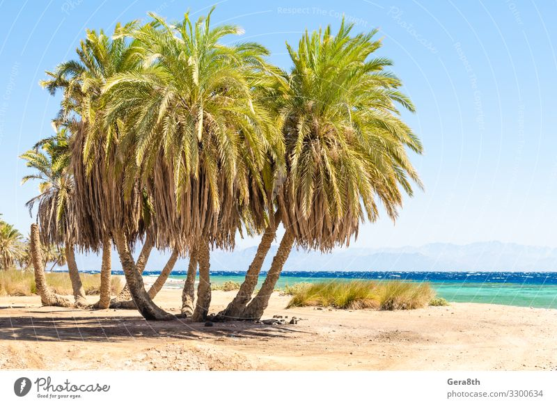 palm trees by the sea against the backdrop of mountains in Egypt Exotic Vacation & Travel Tourism Summer Beach Ocean Waves Mountain Nature Landscape Plant Sand