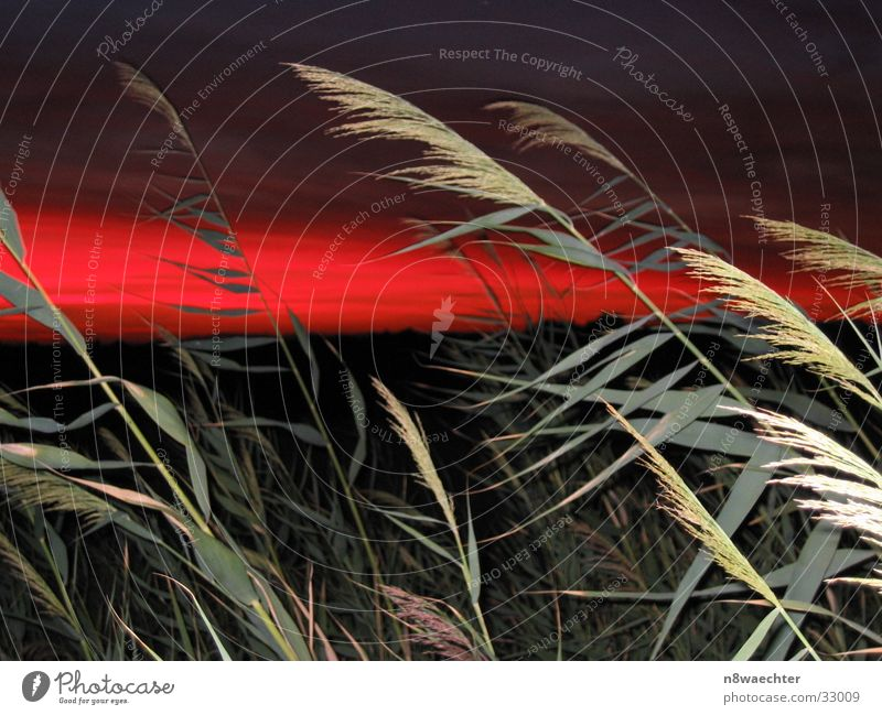 sunset Grass Play of colours Red Green Dusk Sky Contrast flash effect