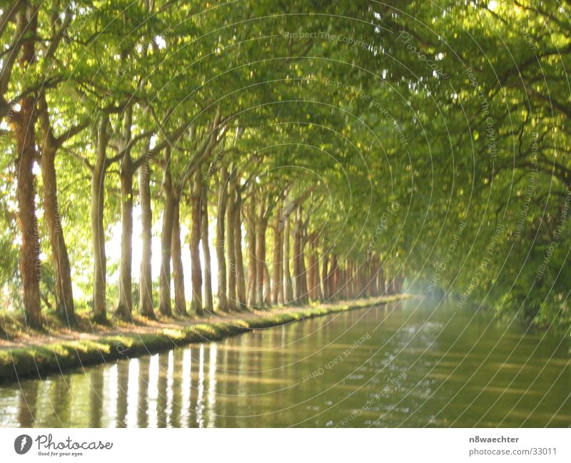 plane forest Row of trees Canal du Midi Southern France Green Boating trip plane trees Relaxation Water