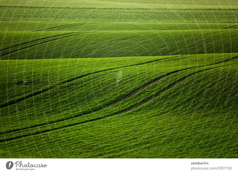 Green field Landscape Mecklenburg-Western Pomerania Rügen Vacation & Travel Agriculture Field winter barley winter wheat Sowing Pasture Waves Bulge Hill Tracks