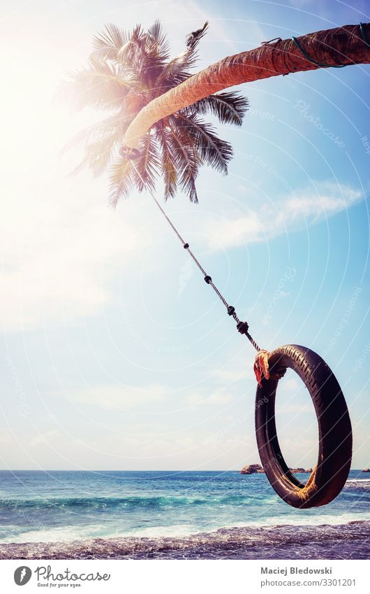 Palm tree with tire swing against the sun. Joy Vacation & Travel Freedom Summer Summer vacation Sun Beach Ocean Island Sky Tree Coast Joie de vivre (Vitality)