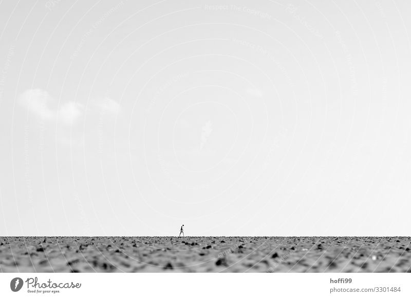 lonely person in the distance alone at low tide in the Wadden Sea Hiking Adventure Summer Beach Ocean Human being Adults 1 Gloomy Dry Endurance Wanderlust