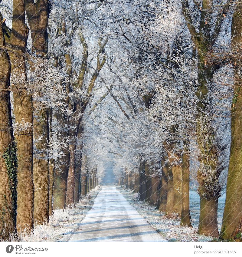 winter avenue with snow on the street and hoarfrost on the trees Environment Nature Plant Winter Ice Frost Snow Tree Street Avenue Freeze Stand Esthetic