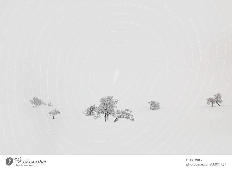Trees in snow Snowscape Fog Snowfall Deciduous tree Bergen Norway wallpapers Nature Winter Ice Cold Bleak