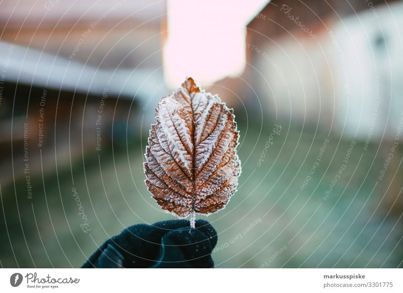 Frozen leaf Parenting Education Science & Research Child Study Gardening Human being Man Adults Hand 1 18 - 30 years Youth (Young adults) Nature Plant Animal