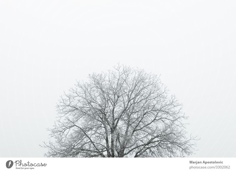 Frosted top of the tree in winter time Sky Nature Plant Landscape Tree Loneliness Winter Life Environment Cold Natural Moody Ice Fog Weather Growth
