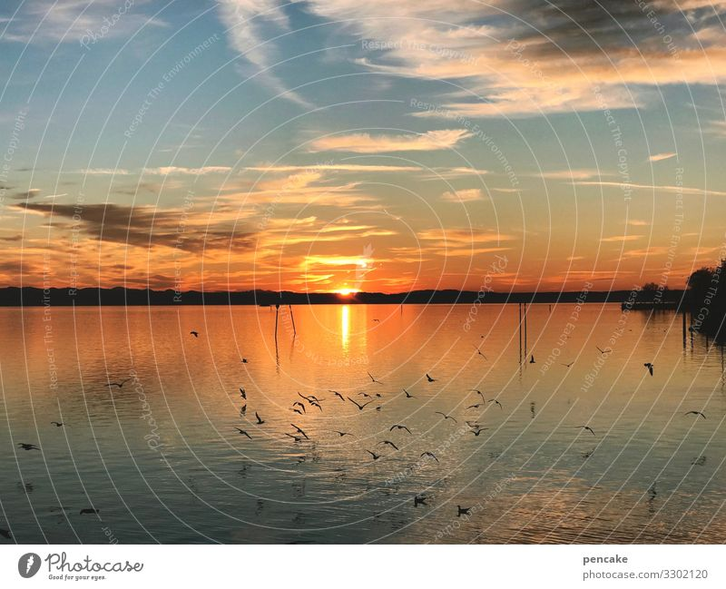 sea breeze Nature Landscape Elements Water Sky Sun Winter Lakeside Relaxation Warmth Moody Lake Constance Gull birds Incandescent Colour photo Exterior shot