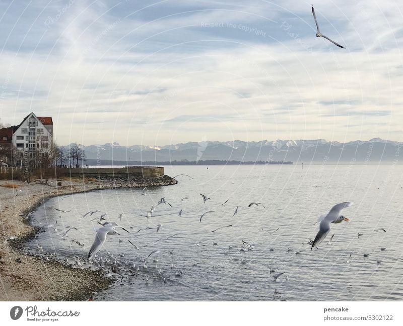 and eternal greetings... Nature Landscape Elements Water Sky Winter Lakeside Lake Constance Friedrichshafen Town Port City House (Residential Structure)