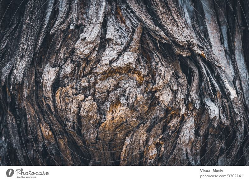 Texture of the bark of a Styphnolobium japonicum commonly known as Pagoda tree Nature Plant Earth Spring Tree Garden Park Field Forest Virgin forest Wood Old