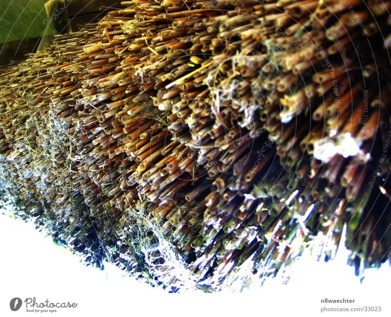 thatched roof Straw Roof Close-up Light (Natural Phenomenon) Structures and shapes Multicoloured