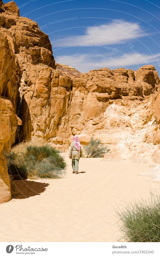 Bedouin walks among the rocks in a desert canyon in Egypt Human being Sky Vacation & Travel Nature Summer Plant Blue Colour Green Landscape Mountain Warmth