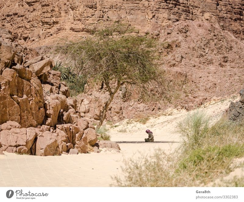 Bedouin prays sitting in the shade in the desert in Egypt Summer Mountain Human being Man Adults Nature Plant Sand Tree Rock Clothing Scarf Stone Sit Black