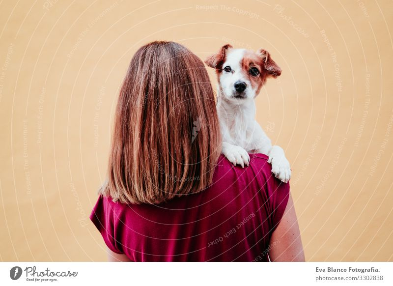 young woman holding cute small jack russell dog on shoulder. yellow wall background Woman Dog Pet Love yellow background City Hold owner Youth (Young adults)