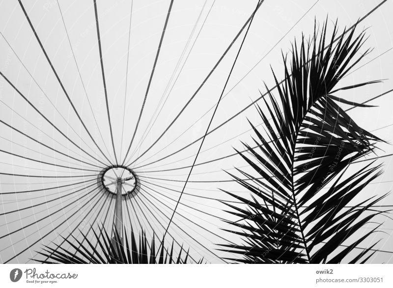 Palm Sunday Leaf Exotic Palm frond palm branch Vienna Pavilion Elegant Protection Safety Prop Covers (Construction) Tarpaulin Baldachin Pole Black & white photo