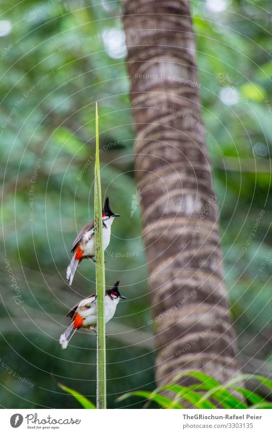 two birds on a branch against a blurred background Bird Animal Feather Colour photo Grand piano in twos Together at the same time Noble plumage Palm tree