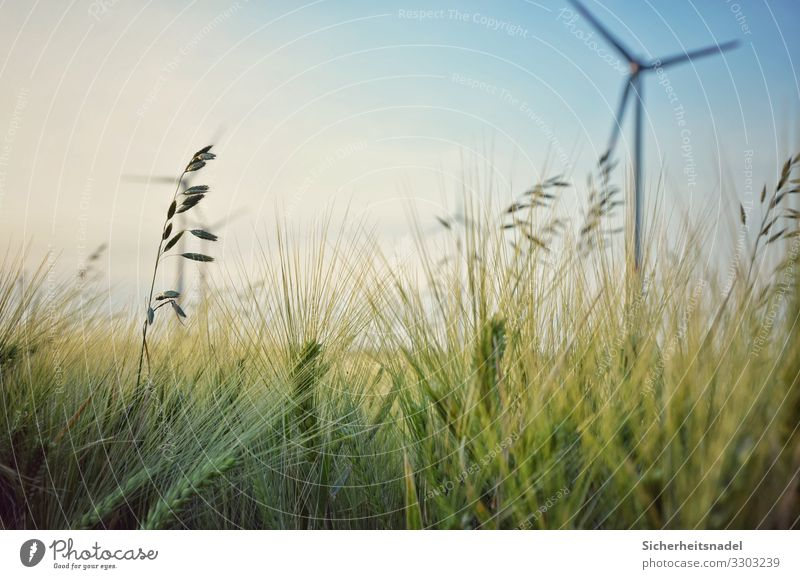 Cornfield with wind turbine Wind energy plant Nature Summer Beautiful weather Plant Bushes Agricultural crop Field Green Grain field Pinwheel Close-up