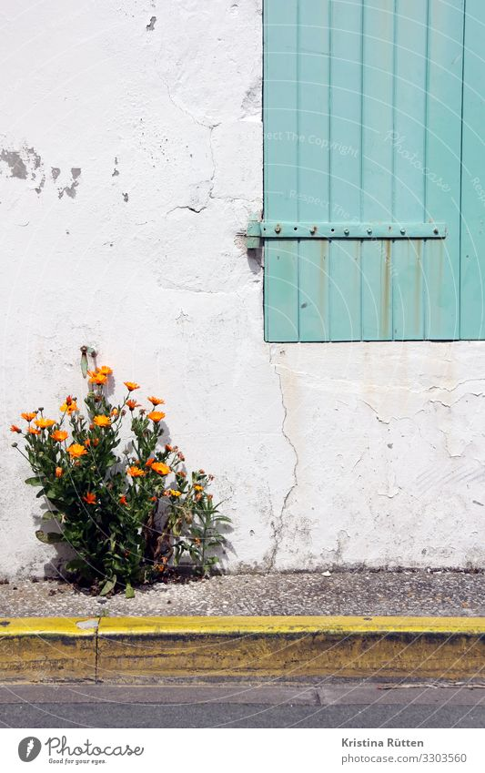 little flowers Plant Flower Agricultural crop Wild plant Garden Wall (barrier) Wall (building) Facade Window Street Blossoming Yellow Green Orange Turquoise