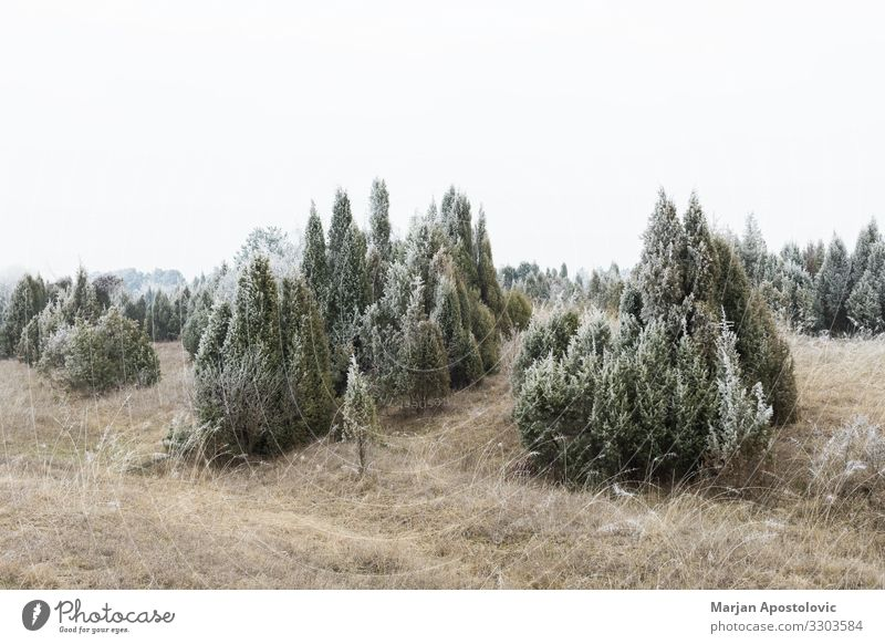 Landscape of frosted field and woods in winter time Environment Nature Plant Winter Weather Fog Ice Frost Tree Grass Bushes Field Hill Freeze Cool (slang) Cold