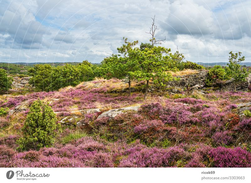 Landscape on the island of Tjörn in Sweden Relaxation Vacation & Travel Tourism Summer Ocean Island Nature Water Clouds Tree Rock Coast North Sea
