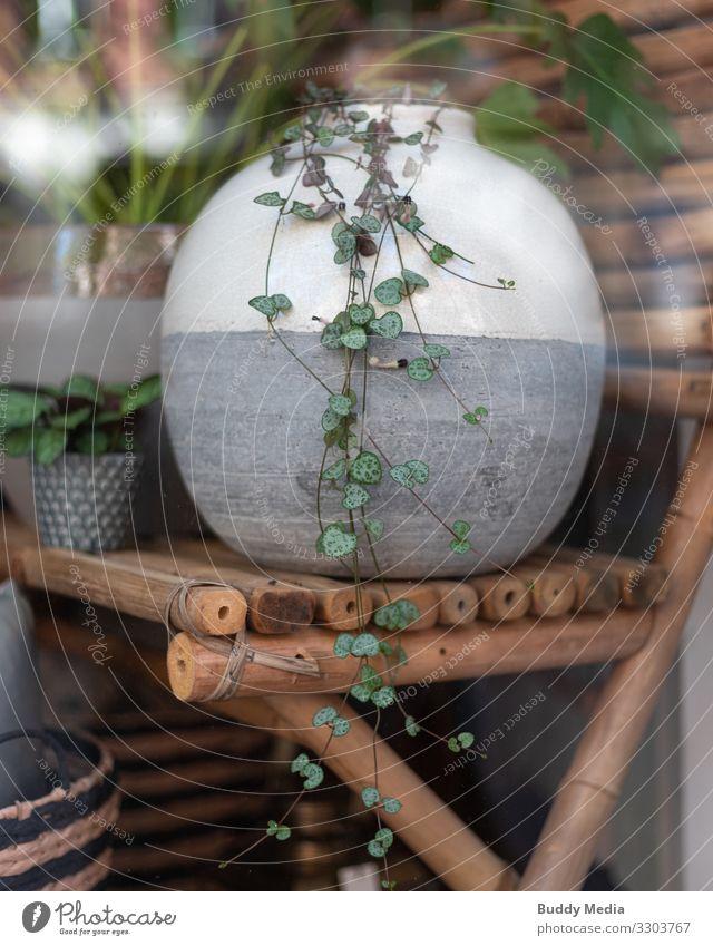 Plant vase in the Berlin shop window Lifestyle Shopping Luxury Elegant Style Design Exotic Arrange Interior design Decoration Furniture Foliage plant Pot plant