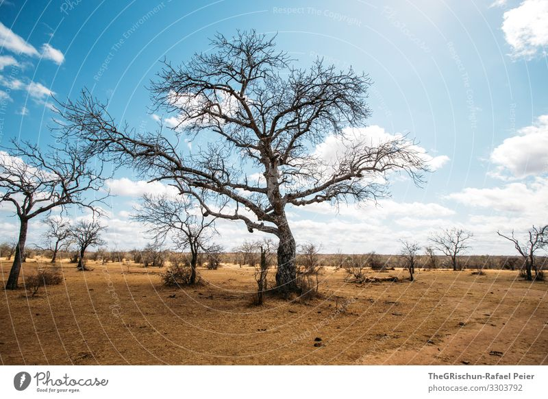 Tree in dry region Savannah Clouds Shadow Dry Africa Landscape Nature Colour photo Grass Sky Environment Safari