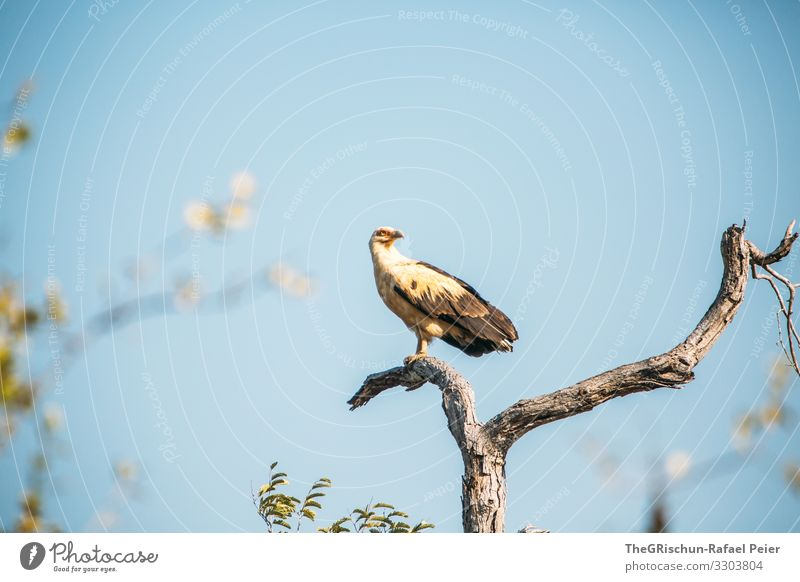 Eagle on a tree Tansania Safari Animal Nature Africa Exterior shot Colour photo Vacation & Travel Adventure Animal portrait 1 Animal face Wild animal Tourism