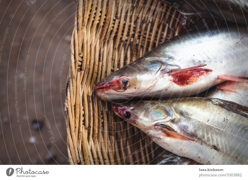 Cambodian catfish in basket Dinner Asian Food Bowl Vacation & Travel Far-off places Nature Lake Animal Fish 2 Eating Healthy Tourism market food fresh fishing