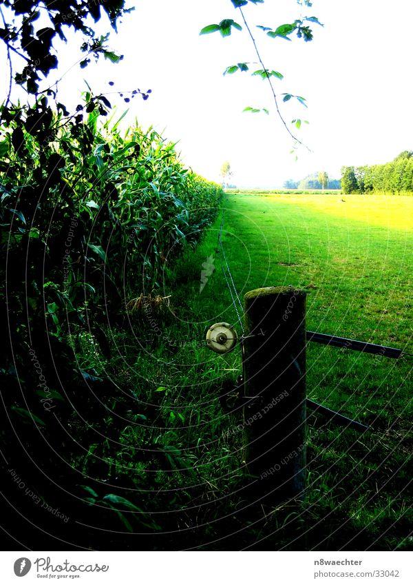 Green Yellow Far-off places Dark Bright Fence Maize Zwillbrocker Venn