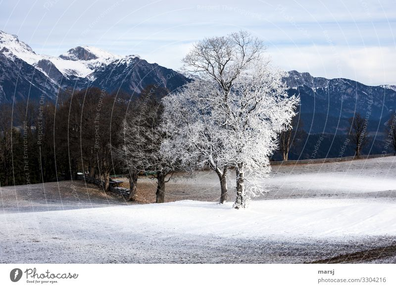 Nature Landscape Tree Winter Mountain Cold Natural Snow Exceptional Ice Power Authentic Uniqueness Frost Canyon Resolve