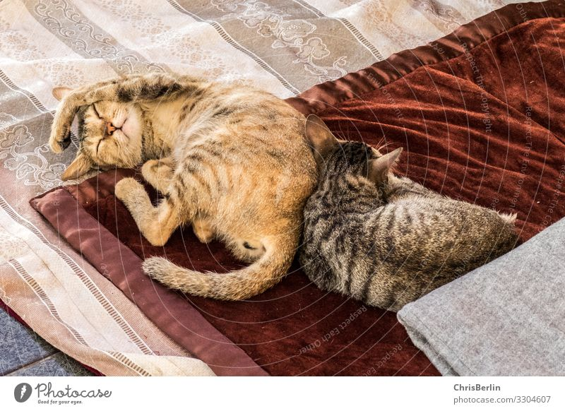 Lounging with cats Animal Pet Cat Paw 2 Relaxation Lie Sleep Together luck Cuddly Contentment Cool (slang) Safety (feeling of) Calm Comfortable Serene Goof off