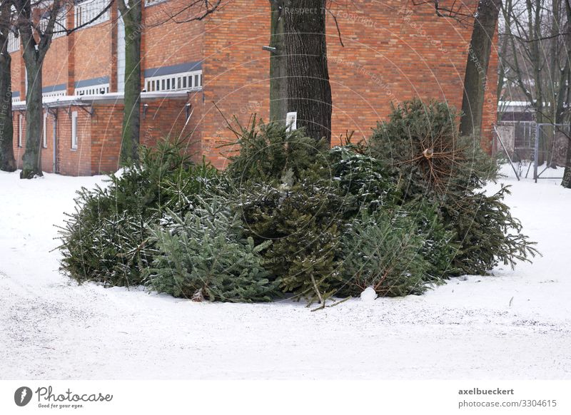 Christmas tree collection Christmas tree disposal Lifestyle Christmas & Advent New Year's Eve Winter Snow Tree Throw Germany City Recycling January Fir tree