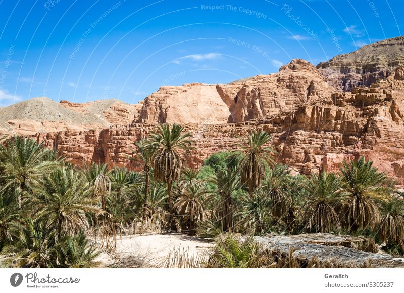 oasis with palm trees in the desert in Egypt Dahab Exotic Vacation & Travel Tourism Summer Mountain Nature Landscape Plant Sky Clouds Warmth Tree Rock Canyon