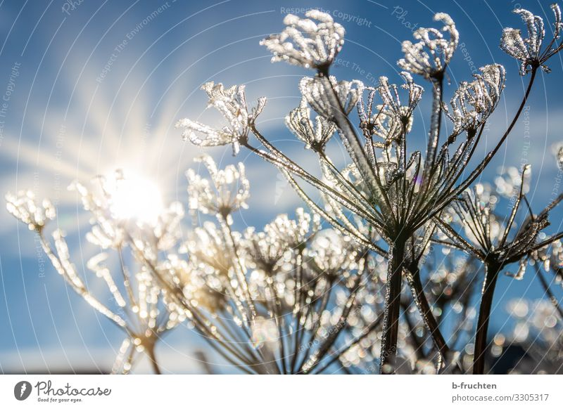 Sky Plant Sun Winter Life Cold Meadow Grass Park Free Fresh Ice Glittering Bushes Beautiful weather Friendliness