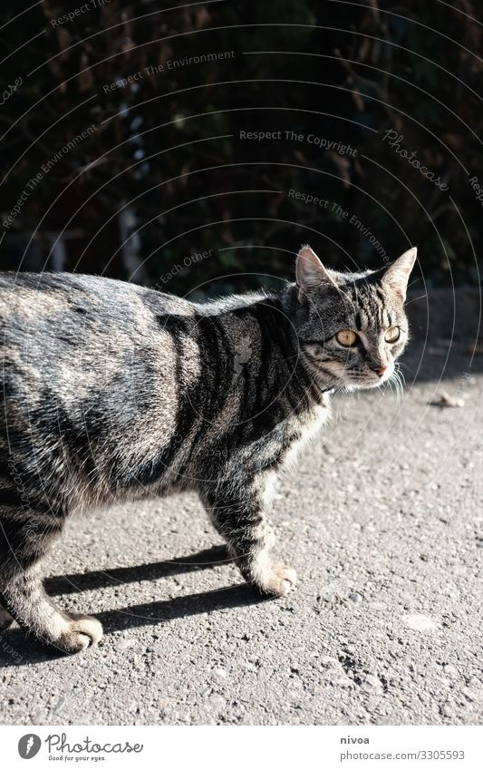 tabby cat Cat food Freedom Environment Small Town Lanes & trails Animal Pet Animal face Pelt Paw 1 Concrete Observe Discover Catch Looking Brash Friendliness