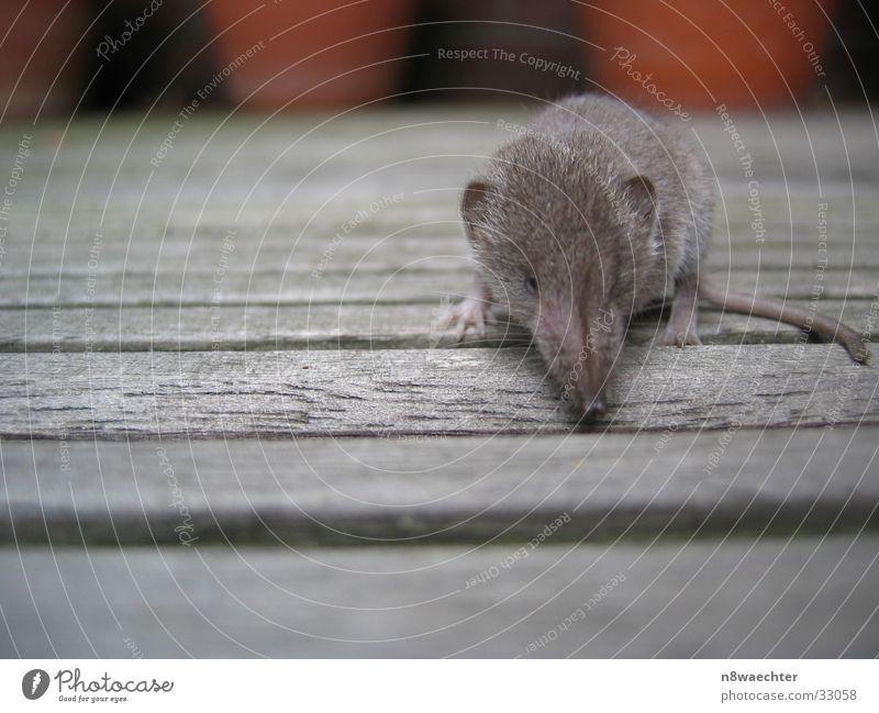 Shrew 2 Crawl Curiosity Flat Gray shrew Baby animal