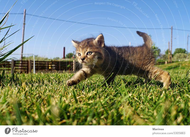 Little cat on the grass of garden. Cat Nature Beautiful Green Animal Funny Grass Small Garden Playing Baby Cute Pet Mammal Paw Kitten