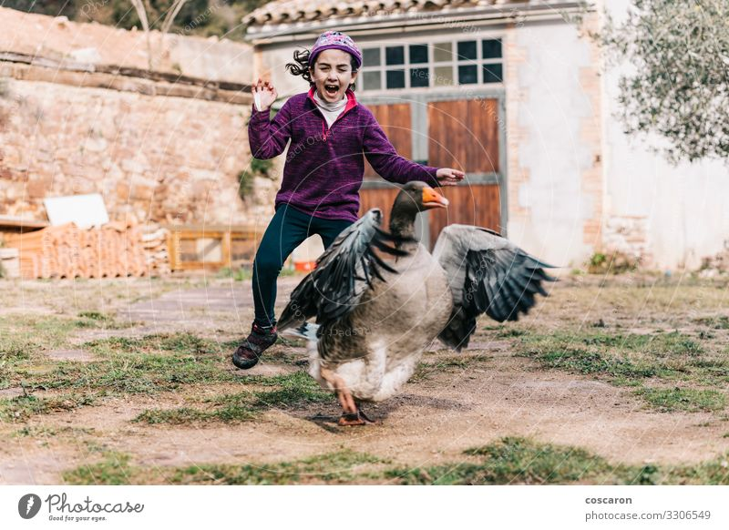Little girl scaring a goose on a farm Joy Happy Leisure and hobbies Playing Vacation & Travel Summer Summer vacation House (Residential Structure) Garden Child