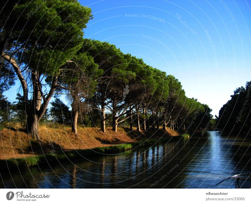 Quiet on the canal Canal du Midi France Infinity Calm Tree Row of trees Coniferous trees Reflection Navigation Water Sky Evening Relaxation