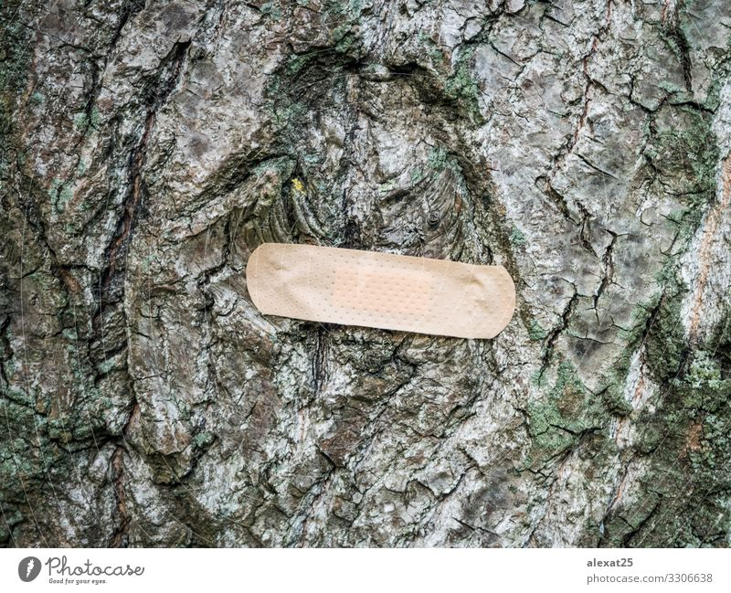 Band-aid on tree - Cure nature concept Health care Illness Medication Environment Nature Earth Tree Globe Natural Green Protection Adhesive background band-aid