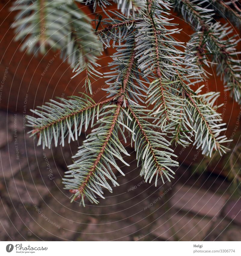 worn-out dried out fir branches in a waste container Environment Nature Plant Fir branch Fir tree Fir needle Stone Lie Authentic Simple Natural Brown Green