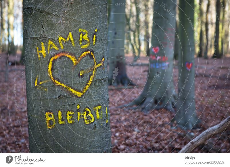 In the Hambach Forest Environment Nature Summer Climate change Tree Characters Graffiti Heart Love Authentic Friendliness Together Sustainability Positive