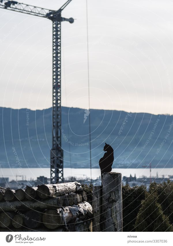 sitting cat with view on the lake Cat metallic Art Construction site Crane Lake zurich mountains rapperswil schweiz Sky Construction crane wood Build shilouette