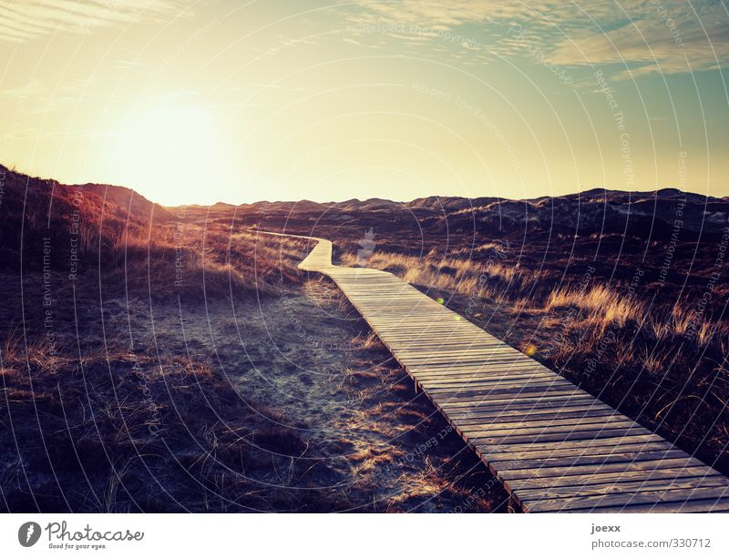 Eternal Landscape Horizon Sun Sunrise Sunset Sunlight Summer Beautiful weather Island Amrum Lanes & trails Warmth Blue Brown Yellow Warm-heartedness Romance