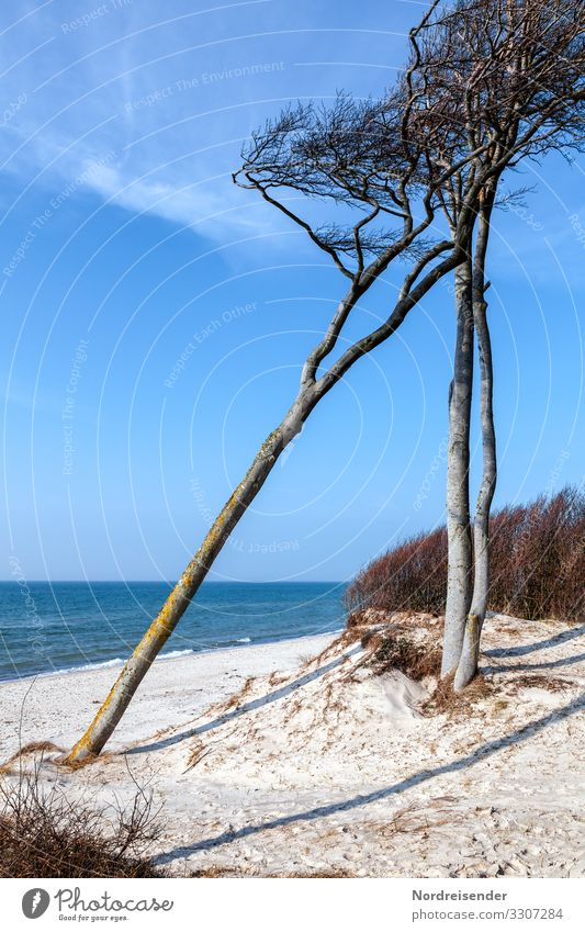 Wind chaser on the west beach Vacation & Travel Tourism Summer vacation Nature Landscape Elements Sand Water Cloudless sky Spring Beautiful weather Tree Waves