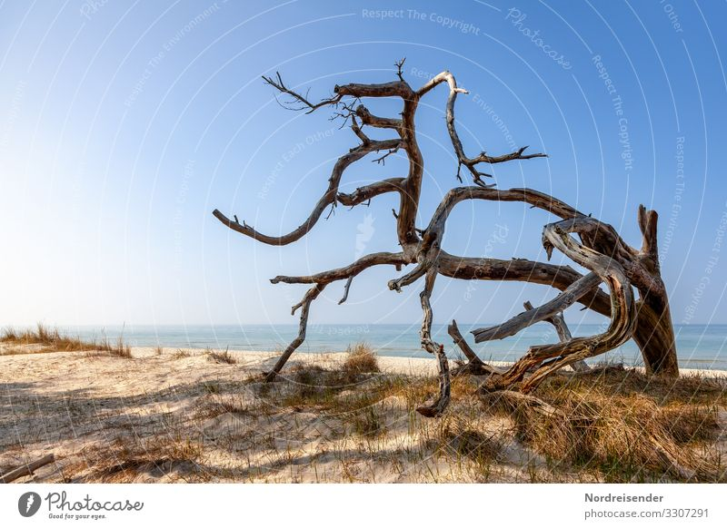 western beach Vacation & Travel Tourism Beach Ocean Nature Landscape Elements Sand Water Cloudless sky Spring Summer Beautiful weather Tree North Sea Baltic Sea