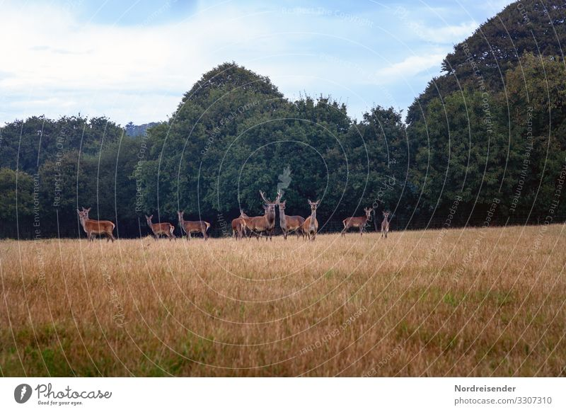 Red deer in a clearing Trip Agriculture Forestry Nature Landscape Plant Animal Sky Clouds Summer Beautiful weather Tree Grass Meadow Wild animal