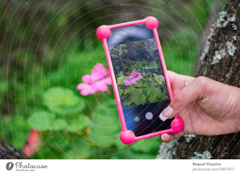 Photo with a smartphone to a pink flower. Telephone Cellphone Technology Hand Nature Spring Flower Beautiful Green Pink mobile to photograph display Digital