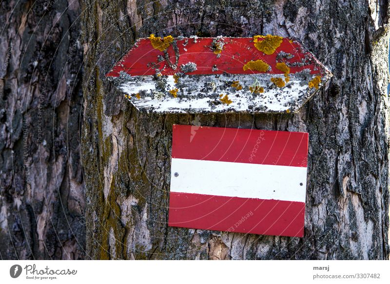 groundbreaking Moss Tree bark Wood Sign Signs and labeling Signage Warning sign Red-white-red Old Authentic Unwavering Orderliness Beginning Bizarre Hope