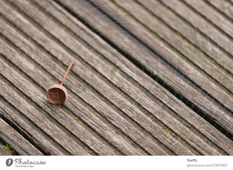 Nature Loneliness Wood Autumn Environment Natural Small Germany Copy Space Brown Footpath Simple Floor covering Ground Hat Wooden board