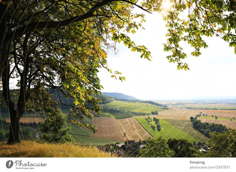 Vineyards near Castell in Lower Franconia Beautiful Tourism Trip Far-off places Summer Sun Hiking Agriculture Forestry Nature Landscape Clouds Weather Fog